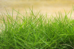 Green Summer Grass Stock Photos