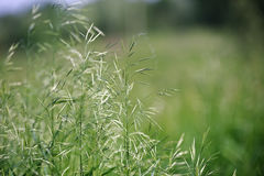 Green summer grass background Royalty Free Stock Images