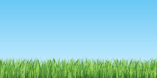 Green summer grass and blue sky. Natural and summer background. 3d illustration High resolution Royalty Free Stock Photography