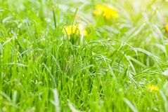 Green summer grass meadow with bright sunlight. Stock Photo