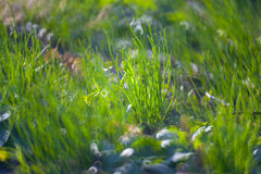 Green Summer Grass Meadow C Stock Photo