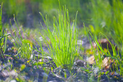 Green Summer Grass Meadow C Stock Images
