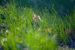 Green Summer Grass Meadow C Stock Image
