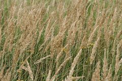Green grass. background royalty free stock images