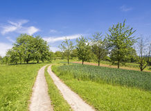 Green summer landscape against blue sky Stock Photos