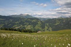 Green summer landscape in the Bernese Oberland Stock Images