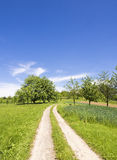 Green summer landscape blue sky Stock Image