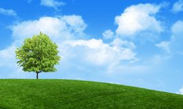 Green summer landscape scenic view wallpaper. Solitary tree on grassy hill and blue sky with clouds. Lonely tree springtime. Green summer landscape scenic view royalty free stock photo