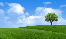 Free Green Summer Landscape Scenic View Wallpaper. Solitary Tree On Grassy Hill And Blue Sky With Clouds. Lonely Tree Springtime. Stock Photos - 141682693