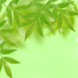 Green summer leaves Royalty Free Stock Images