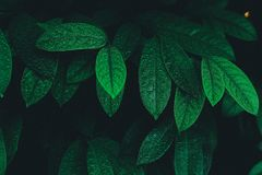 Green summer leaves. With a nature background Stock Photo