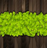 Green summer leaves on wooden background Royalty Free Stock Photo