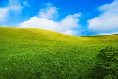 Green Summer Meadow Stock Photography