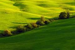 Green summer meadow landscape. Summer in the fields. dyllic view of hilly farmland in Tuscany in beautiful morning light, Italy. L Royalty Free Stock Images