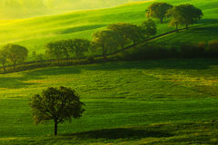 Green summer meadow landscape. Summer in the fields. Idyllic view of hilly farmland in Tuscany in beautiful morning light, Italy. Stock Photo