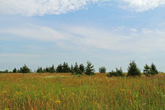 Green summer meadow, Russia. Green summer meadow, Central Russia Royalty Free Stock Images