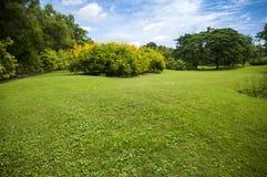 Green summer park garden. Royalty Free Stock Photo