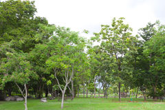 Green summer park Stock Photo