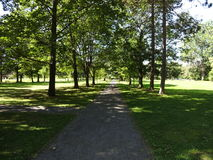 Green summer park pathway. Endless path under an avenue of trees in a green sunny park Royalty Free Stock Images