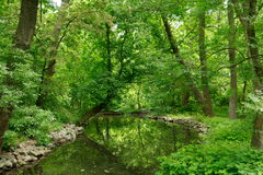 Green summer park with stream Royalty Free Stock Photos