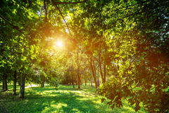 Green summer park vivid landscape. Sun shining through leaves. Royalty Free Stock Photo