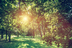 Green summer park vivid landscape. Sun shining through leaves. Stock Photography
