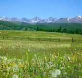 Green summer pasture Royalty Free Stock Images