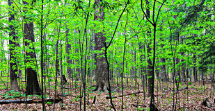 Green summer's forest. Green and lush summer forest in Cleveland, Ohio, Cleveland MetroParks Stock Photo