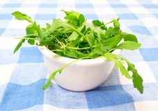 Green summer salad on white plate Royalty Free Stock Image