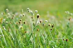 Green summer shining grass in sunlightg. bright nature backgroun Stock Photos