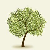 Green summer tree Royalty Free Stock Images