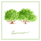 Green summer tree with many leaves watercolor Stock Photography