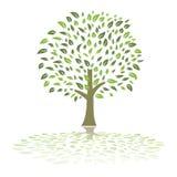 Green summer tree vector Royalty Free Stock Photos