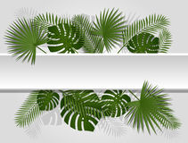 Green summer tropical header with exotic palm leaves and plant. Vector floral design on white line background Stock Images