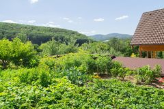 Green summer vegetable garden by house Stock Photography