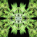 Green Sun As a Flower Fractal Royalty Free Stock Photography