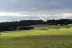 Green sun-lit meadows and fields in the woods background Stock Image