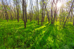 Green sunny forest glade Stock Images