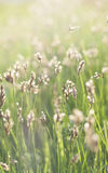 Green sunny grass Stock Images