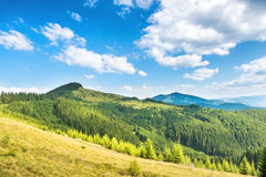 Green sunny hills Royalty Free Stock Image