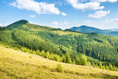 Green sunny hills Stock Image