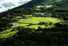 Green and sunny hillside Royalty Free Stock Photography