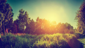 Green sunny landscape, countryside panorama. Vintage Stock Photo
