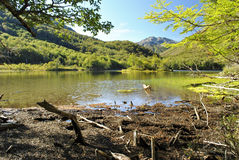 Green and sunny mountain lake. Hiking though the forests of El bolson is a wonderful experience royalty free stock image