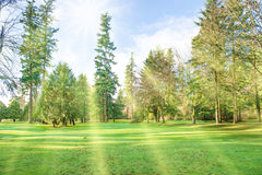 Green sunny park with big trees Royalty Free Stock Image