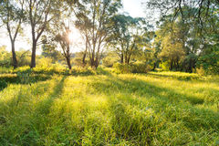 Green sunny park Royalty Free Stock Photography