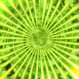 Green sunshine Royalty Free Stock Photos