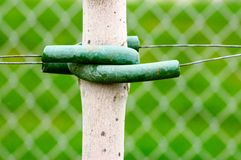 Green Support. Detail of a young tree trunk supported by green plastic protected wire Royalty Free Stock Image