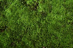 Green surface. Green plants in rainforest in Asia Royalty Free Stock Photo