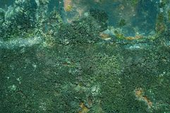 Green surface texture Stock Photography
